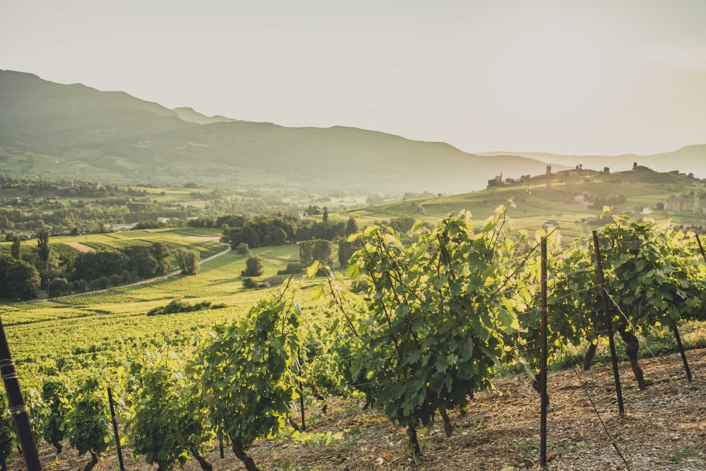 Vins de Savoie Jean-Charles Girard-Madoux, à Chignin (73)